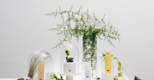 A Natale regala il benessere con le Terme di Cervia: Fitomelatonina, Alga Dunaliella e Salicornia alleate della salute e della bellezza
